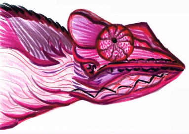 Chamelion Pink