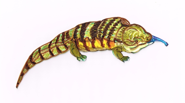 Lizard Blue Tounge Skink