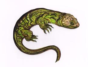 Lizard Corucia