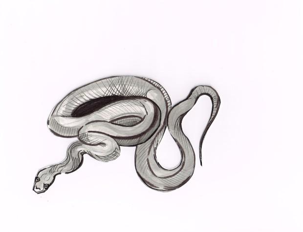 Snake Corn grey