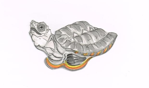 Turtle Kwangtung