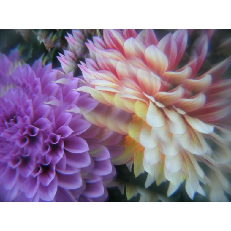 K-FLOWERS